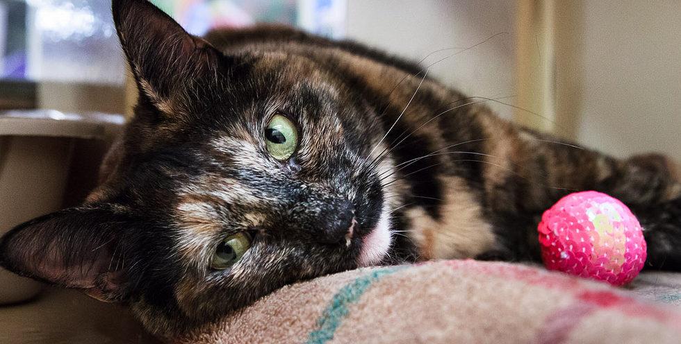 Browse Adoptable Cats