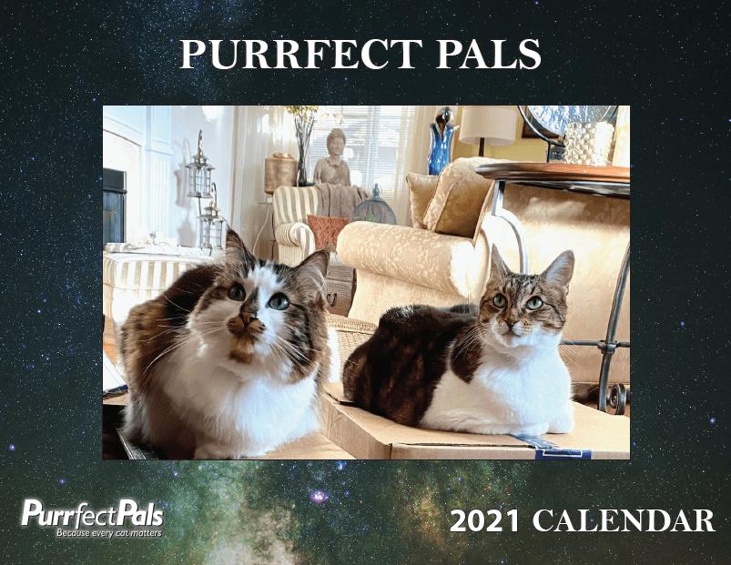 2021 Purrfect Pals Calendar