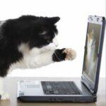 Computer Cat thumb