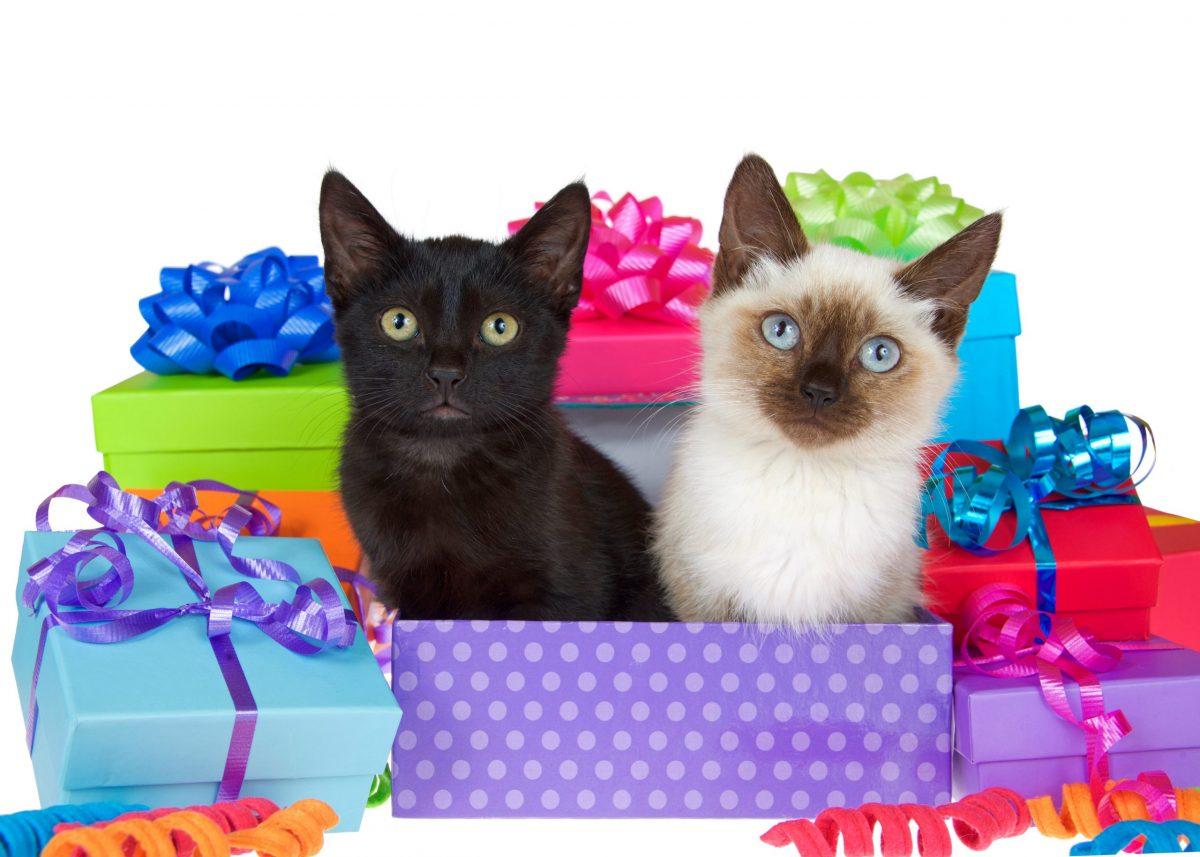 Virtual Kitten Shower! March 13th-27th