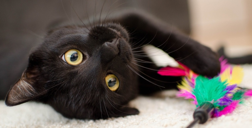 Things to Consider Before Adopting a Cat