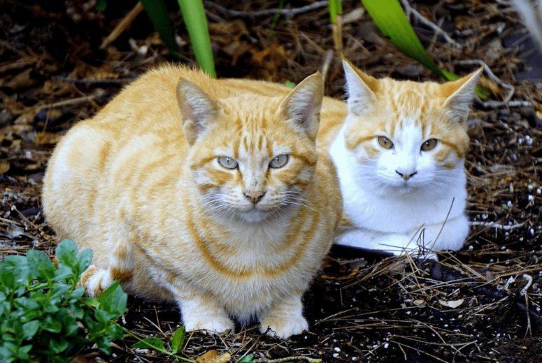 Community Cat Resources