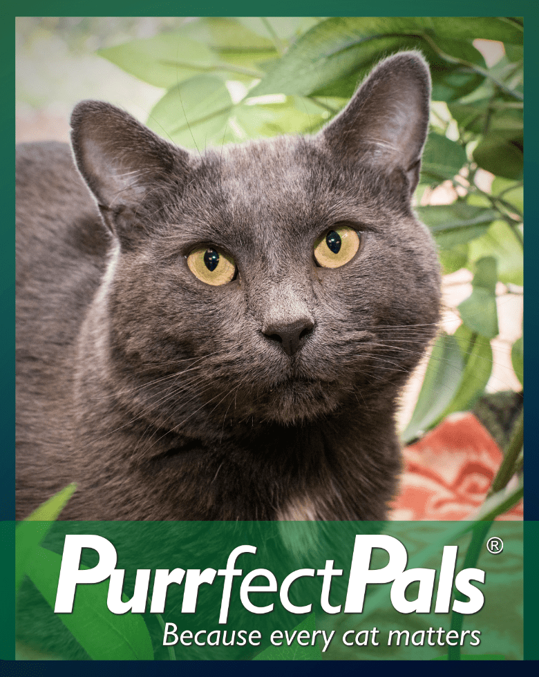 Home - Purrfect Pals