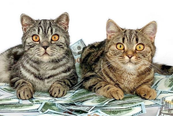 Organize a PURRsonal Fundraiser for Purrfect Pals!