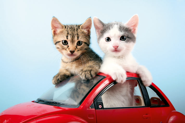Donate Your Vehicle to Purrfect Pals