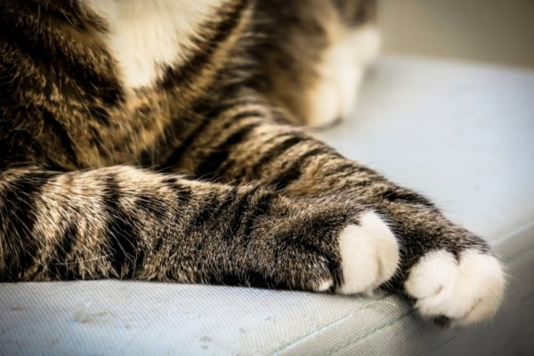 About Declawing