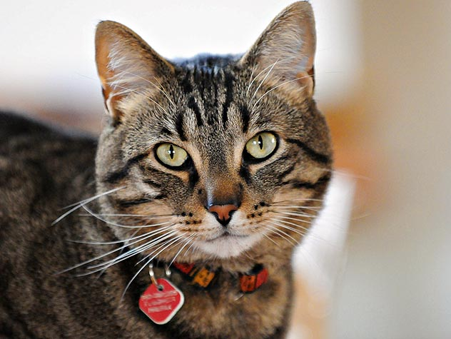 Cat Shelters and Rescue Organizations