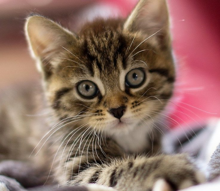 Become a Purrfect Pals Foster Parent!