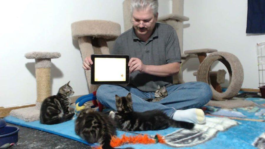 Foster Dad John's Critter Room Kitten Cam